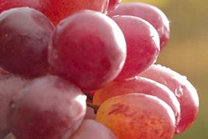 Виноградная Вода